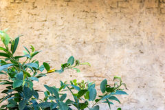 Background with unfocus vintage wall and focus plant on first plan Stock Photography