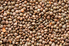 Background of unpeeled red lentils. Royalty Free Stock Photography