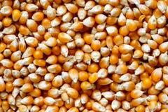 Background of unpopped popcorn. Stock Photo