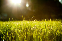 Background of unreal nature. Background of unreal black sky with sun and grass Stock Photo