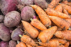 Background of unwashed vegetables. Dirty vegetables harvested for winter storage Royalty Free Stock Photo