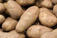 Us potato russet Royalty Free Stock Photography