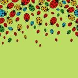Background with variegated ladybugs Royalty Free Stock Image