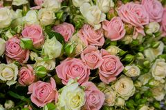 Background from a variety of cream and pink roses. Wedding royalty free stock photography