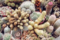 Background of various cacti, gardening theme Royalty Free Stock Photos
