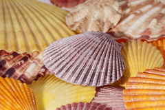 Background of various colorful seashells close up. Royalty Free Stock Images