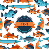 Background with various fish. Image for advertising booklets, banners, flayers, article and social media Royalty Free Stock Image