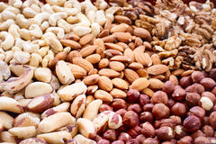 Background from various kinds of nuts Stock Images