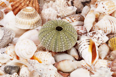 Background of various kinds of sea shells, close up Stock Photos