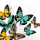 Background with vector  colorful butterflies Stock Photography