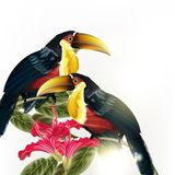 Background with vector colorful tropical birds and flowers Royalty Free Stock Image