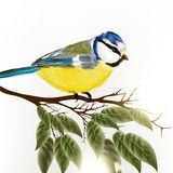 Background with vector detailed bird Stock Image