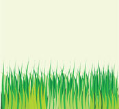 Background with vector green grass Stock Image