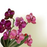 Background with vector orchid  flowers. Beautiful background with orchid flowers Royalty Free Stock Photos