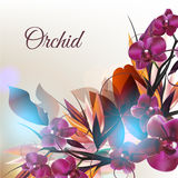 Background with vector orchid flowers. Beautiful fashion background with tropical plants and orchid flowers Stock Photo
