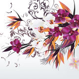Background with vector orchid flowers Stock Images