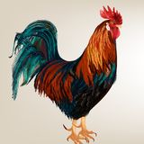 Background with vector realistic cock Stock Photography