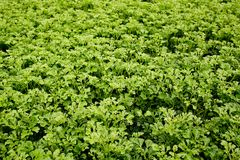 Background of vegetable field Stock Image