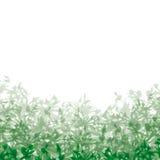 Background vegetation Royalty Free Stock Image