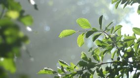 Background video, green foliage, bathed in radiant sunlight. The rays of the sun through the fog, bokeh. 4k stock video
