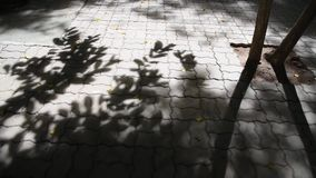 Shadow of the leaves. The background video is the shadow of the leaves swinging along the wind, projecting down to the floor beautifully, classic stock footage