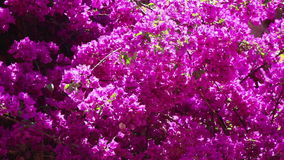 Background view of magenta flowers stock footage