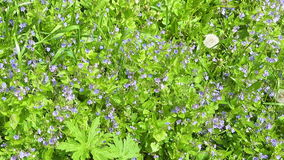 Background view of various green field flowers and plants. Panoramic view stock video footage