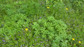 Background view of various green field flowers and plants. Realtime 4k video stock footage