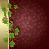 Background with vine Stock Image