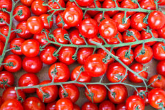 Background of vine tomatoes Stock Photography
