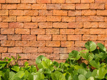 Background of vintage brick wall texture with green leaves Stock Photo