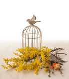 Background with vintage decorative cage and mimosa Royalty Free Stock Images