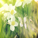 Background-5. Vintage flower background in summer style Stock Photography