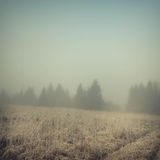 Background-50. Vintage nature background in autumn style Royalty Free Stock Images