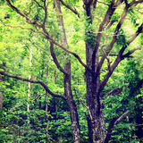 Background-10. Vintage nature background Russian style Royalty Free Stock Photos