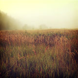 Background-18. Vintage nature background Russian style Royalty Free Stock Photos