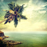 Background-60. Vintage palm background in summer style Stock Image