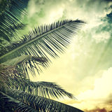 Background-59. Vintage palm background in summer style Stock Images