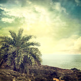 Background-61. Vintage palm background in summer style Stock Image