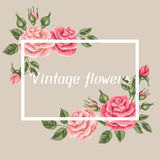 Background with vintage roses. Decorative retro flowers. Image for wedding invitations, romantic cards, booklets Royalty Free Stock Image