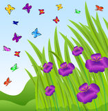 Background with violet flowers and butterflies Royalty Free Stock Photography