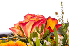 Background of vivid orange roses Stock Photo