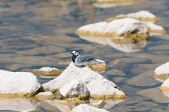 Background with wagtail stock photos