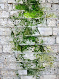 Background wall Royalty Free Stock Photography
