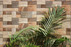 Background of a wall. This is a geometric wall which is made by tiles Royalty Free Stock Image