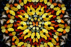 A background wall of many butterflies. The color is very bright and beautiful Royalty Free Stock Images