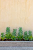 Background Wall With Plants Stock Image