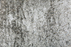 Background  Wall texture Stock Images