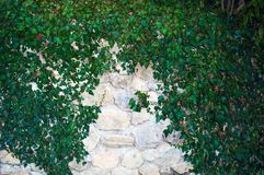 Wall in the foliage stock photos