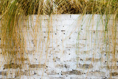 Background wall white block and dry grass Royalty Free Stock Photography